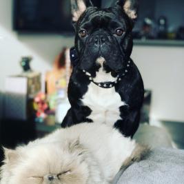 Pets 4 Sale | Pets for Sale, find your next little friend